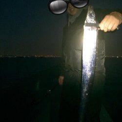 武庫川尻一文字 ドジョウテンヤのタチウオは良型サイズが狙えます