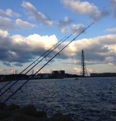 カレイ狙いで深日港へ 投げ釣りでアナゴ・キスの釣果 カレイは…残念でした