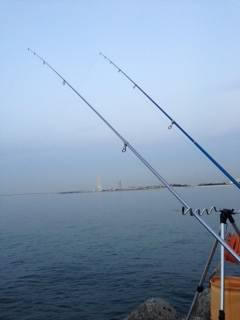 カレイ狙いで樽井へ釣行 久しぶりのカレイは最高の嬉しさ♫
