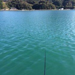 柴山港にてサヨリ釣り〜アタリ繊細で難しいですが面白いです
