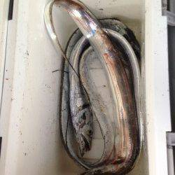 大阪南港へタチウオ釣り サンマの電気ウキ釣りで4本