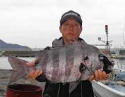 黒島の磯 イシダイの釣果出てます