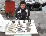 黒島の磯 ヤエンでアオリイカ、新子〜0.5kgサイズ
