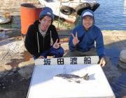 黒島の筏 ヤエンでアオリイカ1.3kgが上がりました☆