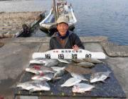 黒島の筏 チヌ・アイゴ・へダイ・ヒラメ、良型で多彩な釣果でした