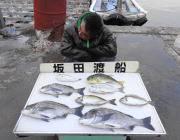 黒島の筏 49cmの良型チヌが釣れました