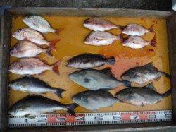 茶釜でカゴ釣り 餌取りに悩まされる一日でした