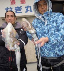 湯浅の磯 ヤエンでアオリイカ胴長28cm