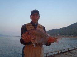 須磨海づり公園 ウキ流し釣りでマダイ60cm!