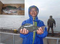 須磨海づり公園 落し込みで記録賞サイズ33cmのグレ