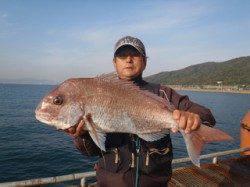 須磨海づり公園 連日良型マダイが釣れています
