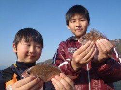須磨海釣り公園 小型ながらもサビキにマダイ