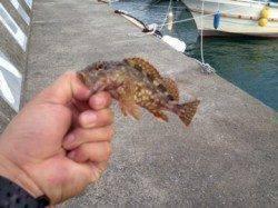 内之浦へライトゲーム釣行 ガシラ・セイゴ・タチウオで楽しめました