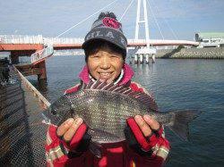 尼崎市立魚つり公園 今日もシラサエビに セイゴが高反応