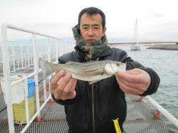 ズボ釣りでセイゴにチヌ 尼崎市立魚つり公園