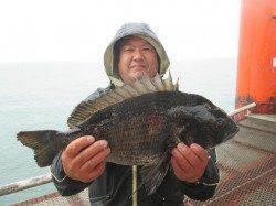 尼崎市立魚つり公園 本日はアタってくるチヌは良型ばかりでした!