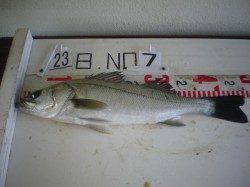 姫路市立遊漁センター ウキ釣りでハネ 探り釣りでアイナメ