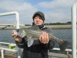 尼崎市魚つり公園 ズボ釣りでハネ&セイゴ