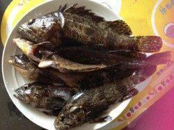 東二見人工島 根魚狙いで穴釣り 産卵で食い気がたっているようでした♪