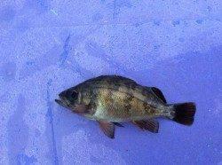 高砂埋立地周辺でサビキ釣り 寒くて釣れません…メバルの釣果だけでした