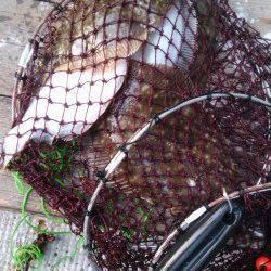 岸和田一文字 沖の北でカレイの釣果 30〜35cmの良型が釣れています