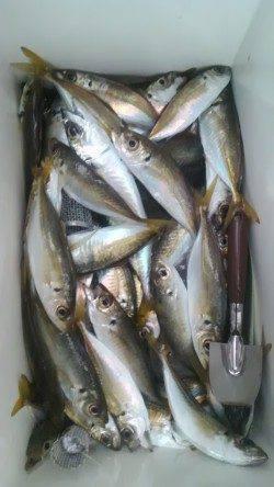 【20日】岸和田一文字 沖の北でカレイ38センチ 旧の赤灯台ではアジ大漁!