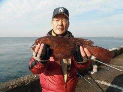 和歌山北港魚つり公園 カンダイ48cmの釣果