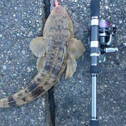 太地港 ワームのタダ巻きにマゴチがヒット 風裏で頑張って釣りました