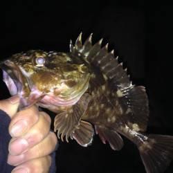 貝塚 釣り納めのガシリング釣行