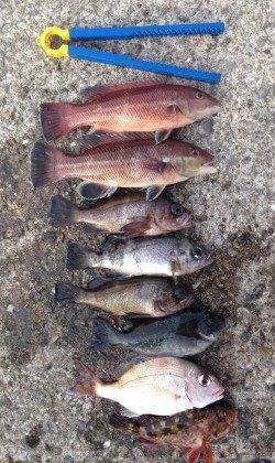 大蔵海岸で投げ釣り 連続で32cm、23cmとカレイが2匹上がりました!