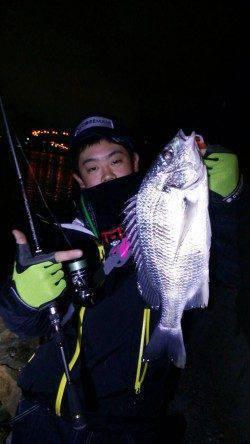 汐見埠頭周辺久々のチニングでキビレの釣果、やはり面白いです!