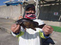 平磯海づり公園 ウキ釣りで27cmの良型メバルをキャッチ