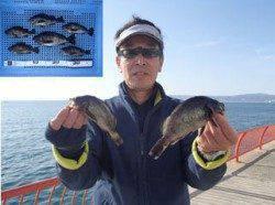 平磯海づり公園 シラサエビのウキ釣りでメバル6匹