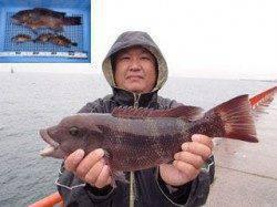 平磯海づり公園 シラサエビのウキ釣りでコブダイ&ガシラ