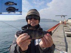 平磯海づり公園 ウキ釣りでメバル・グレの釣果