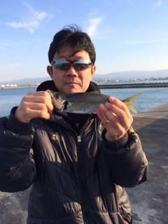 良い型のアジが釣れてると聞いて岸和田一文字にサビキ釣りに行ってきました