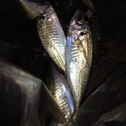汐見埠頭 短時間アジング釣行、ワームは赤系が好反応でした