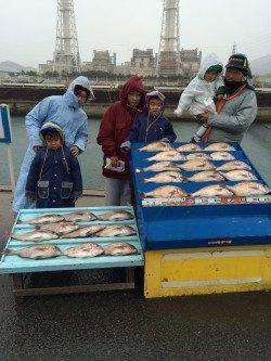 マダイたくさん釣ったどー! マリーナシティ海洋釣り堀