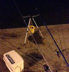 淡輪漁港内向き アナゴ狙いで釣行してきました