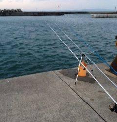 淡輪漁港にアナゴ狙いにへ 外道ではハゼが良く釣れました