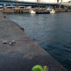 大阪南港にてサビキ釣り 15時頃サバの回遊、アジは夕方に入れ食いタイム