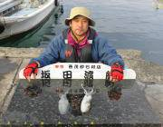 黒島の筏 エギングでアオリイカの釣果