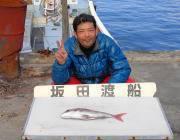 黒島の筏 シラサをエサにマダイの釣果