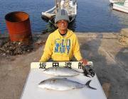 黒島の筏 のませでカンパチ2尾の釣果