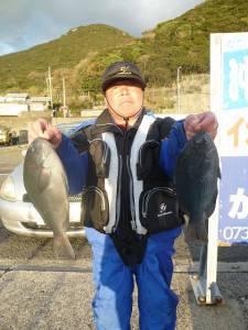 沖一文字内でのカゴ釣り釣果 グレ43cm〜