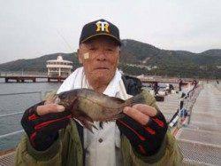 須磨海づり公園 シラサエビのウキ流し釣りでメバル