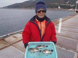 須磨海づり公園、シラサエビの流し釣りでメバル