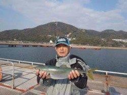 須磨海づり公園 ウキ流し釣りでハマチ50cm