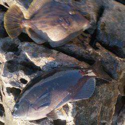 太地港 渡船利用のフカセも厳しい釣りでした。