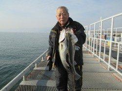 尼崎市立魚つり公園 エビ撒きでスズキクラスの釣果が増えてきています